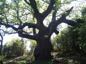 Baska aktivni odmor, setnice (10)